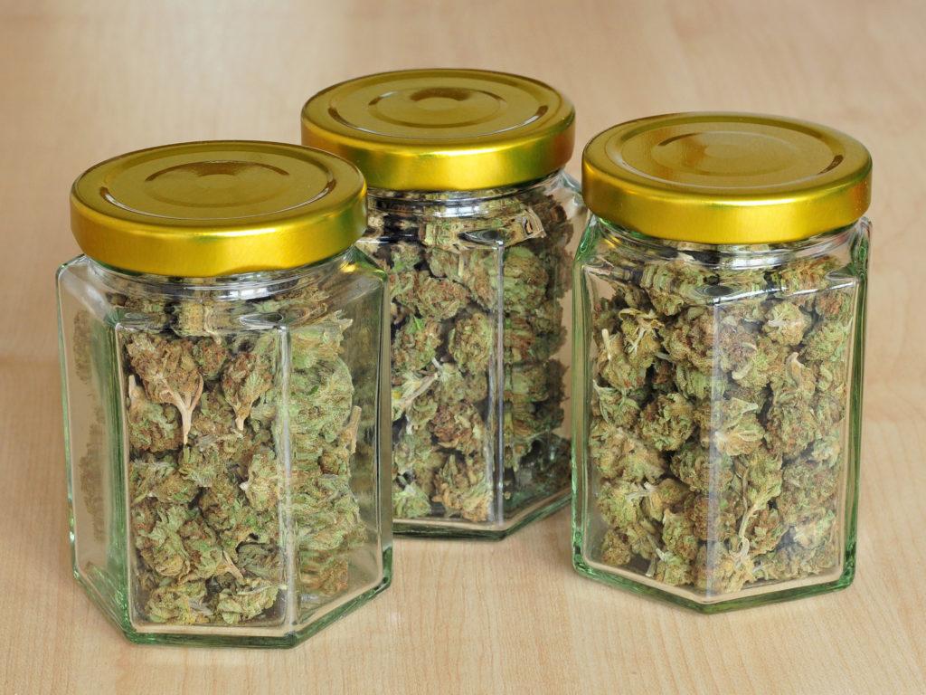 Wie man Cannabis richtig trocknet und aushärtet