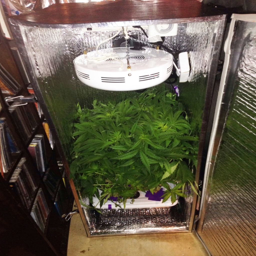 How To Grow Weed In Small Spaces - WeedSeedShop Blog & Small Grow Tents u0026 How To Grow Weed In Small Spaces - WeedSeedShop Blog