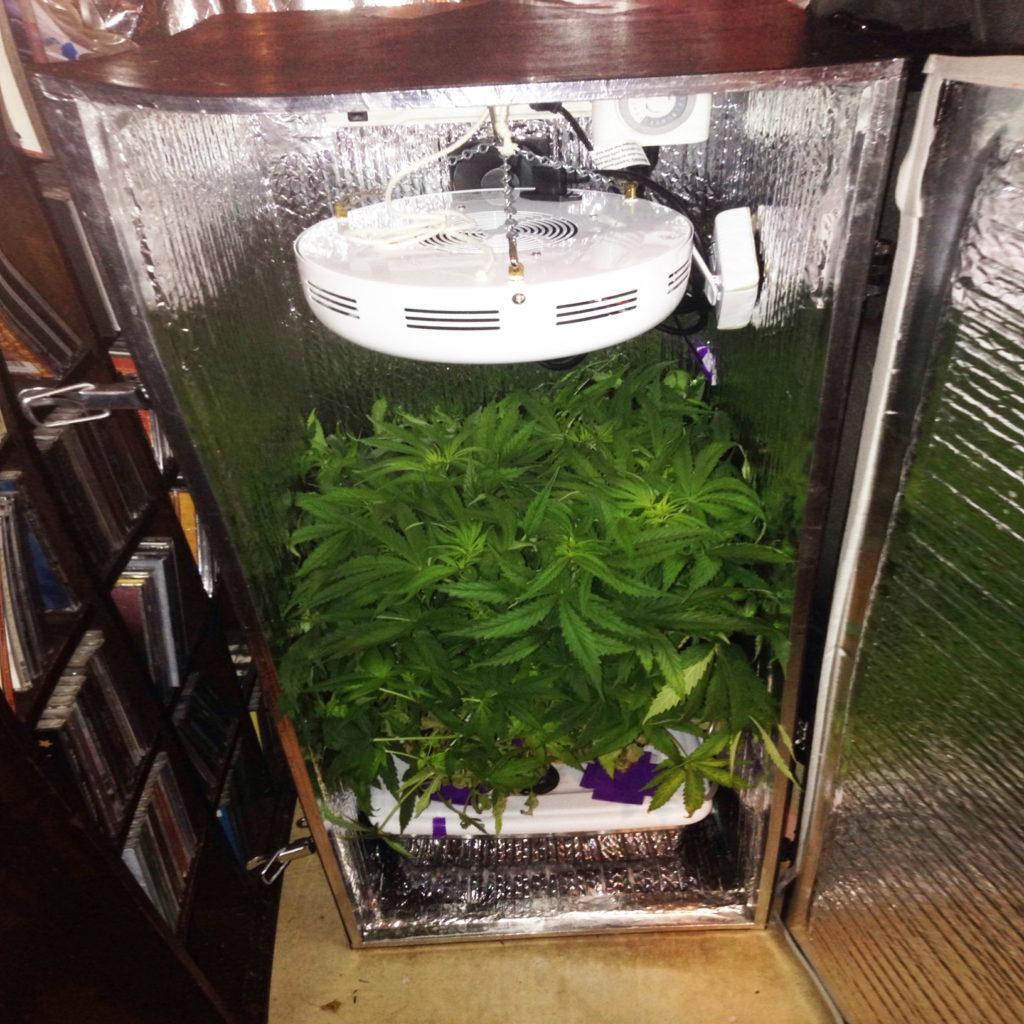 Hoe je wiet kunt kweken in kleine ruimtes - WeedSeedShop Blog