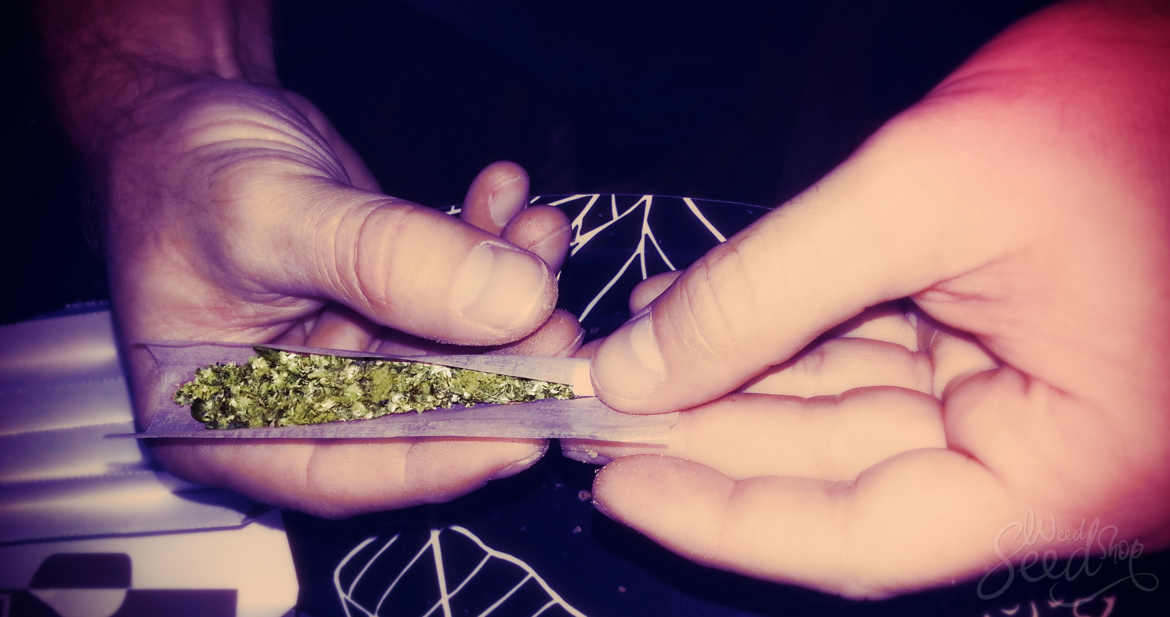 Des herbes pour remplacer le tabac dans les joints - WeedSeedShop Blog