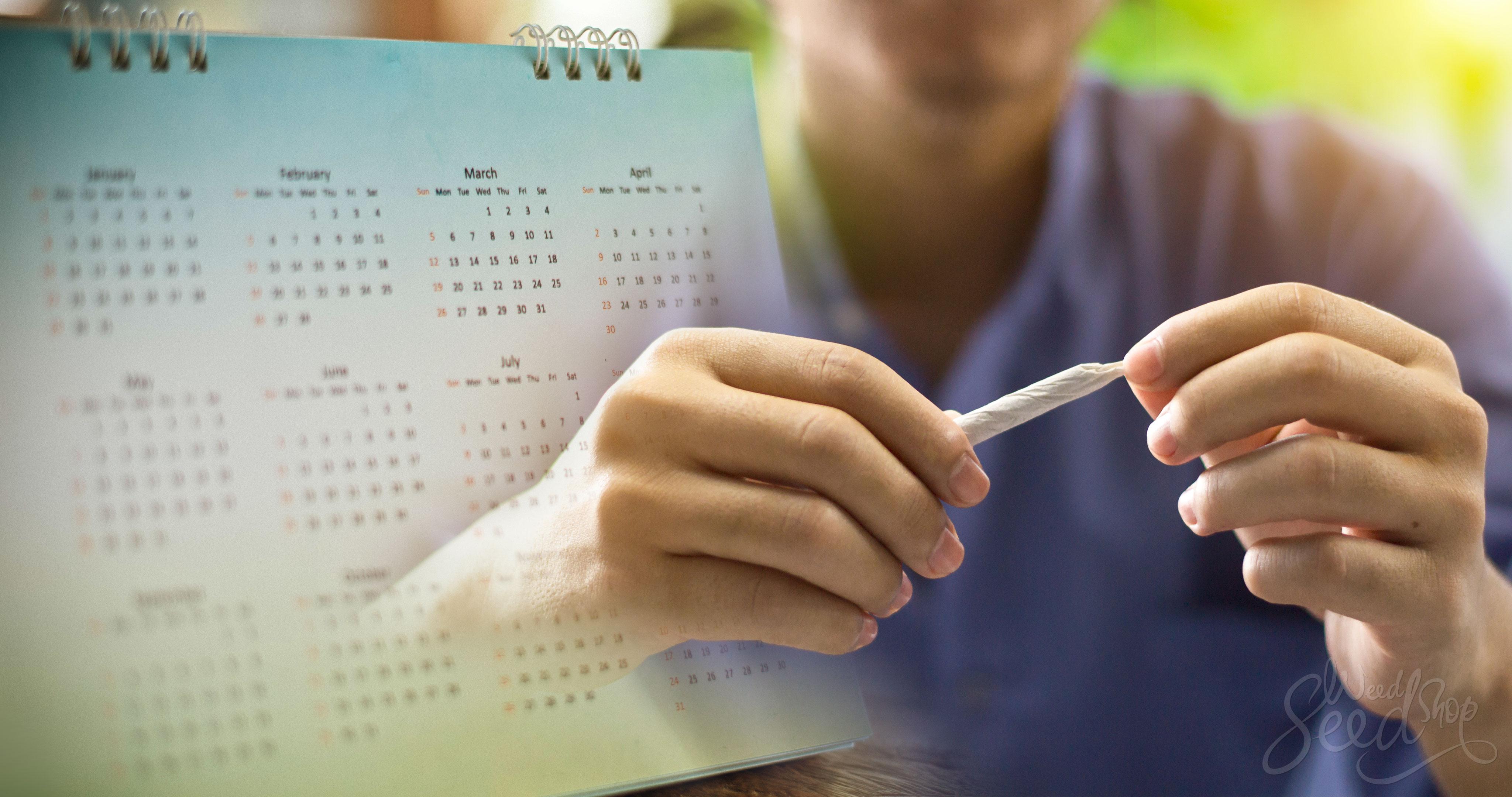¿Por cuánto tiempo el THC dura en tu sistema? - Weed Seed Shop Blog