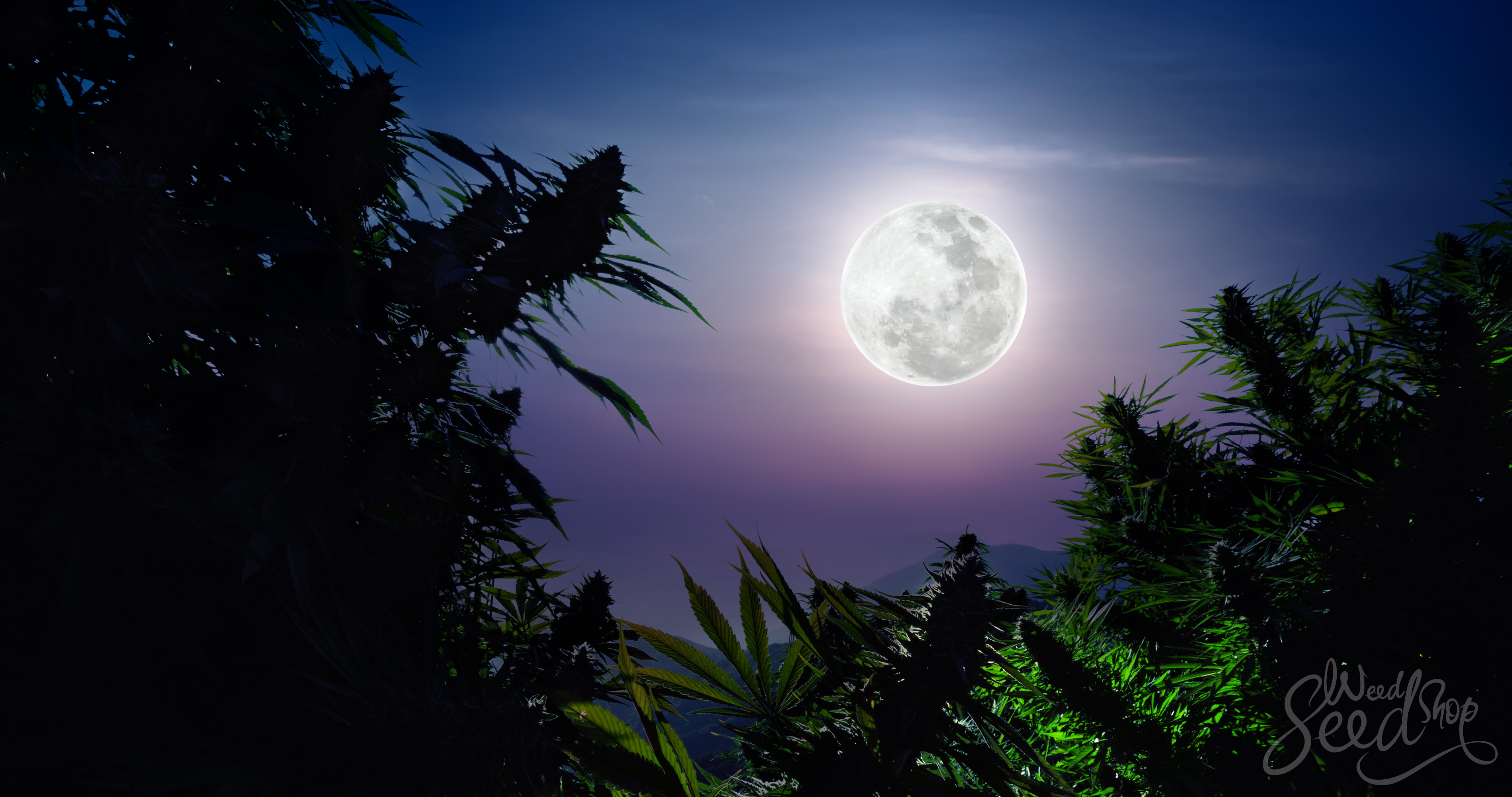 Lunar Planting: How To Use The Moon Phases To Grow Marijuana - WeedSeedShop