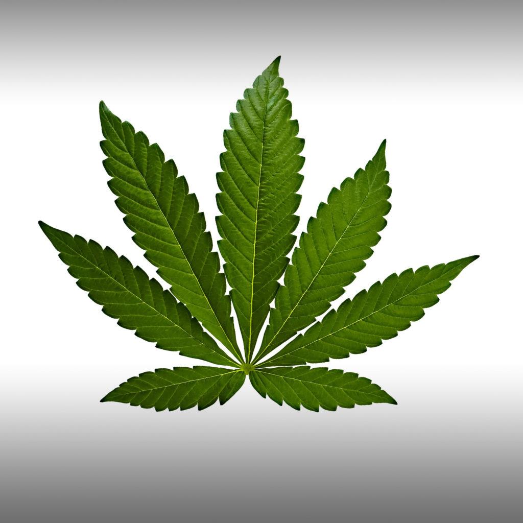 ¿Cuál es la diferencia entre la marihuana sativa, indica e híbrida? - Weed Seed Shop Blog