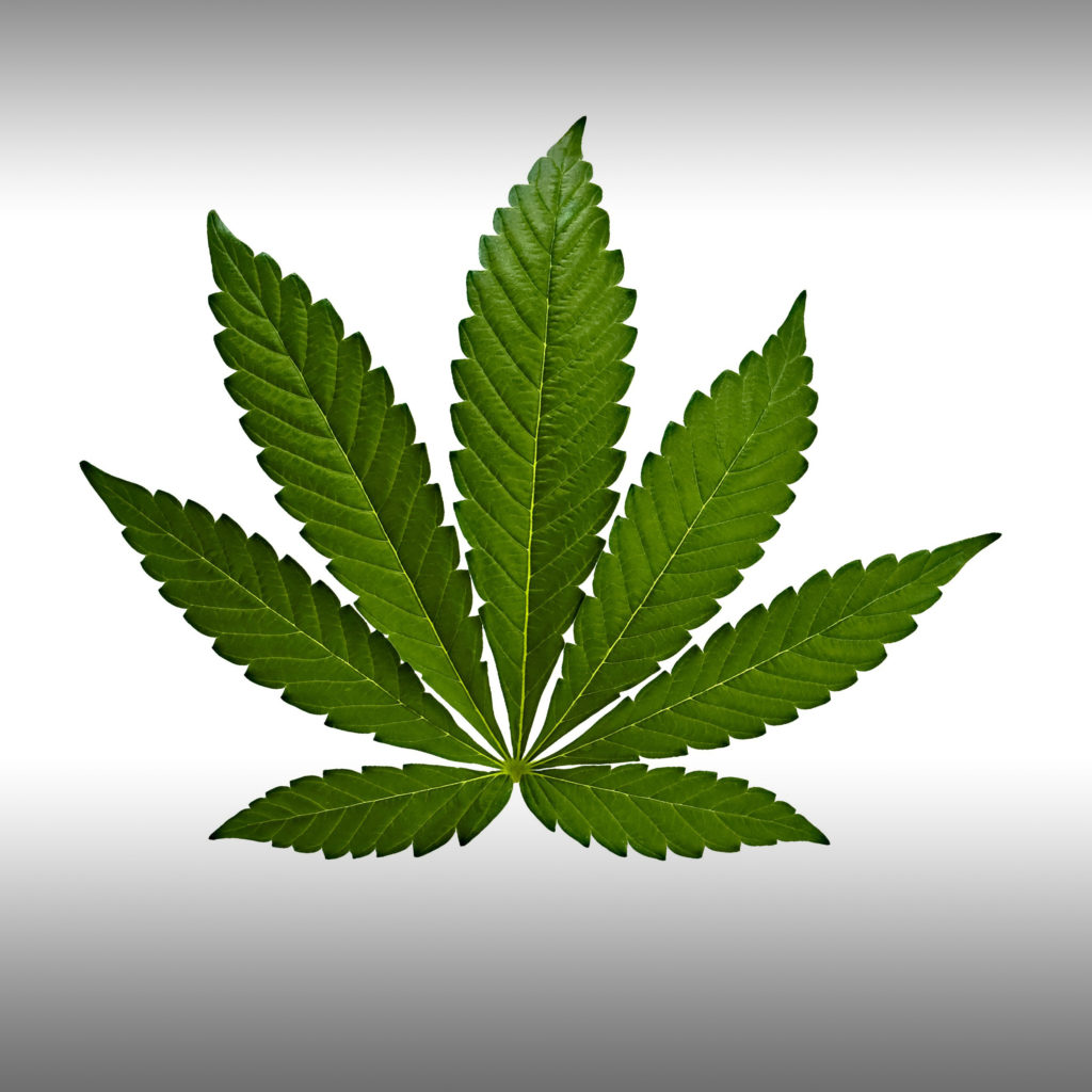 Was ist der Unterschied zwischen Indica, Sativa, und Hybride? - Weed Seed Shop Blog