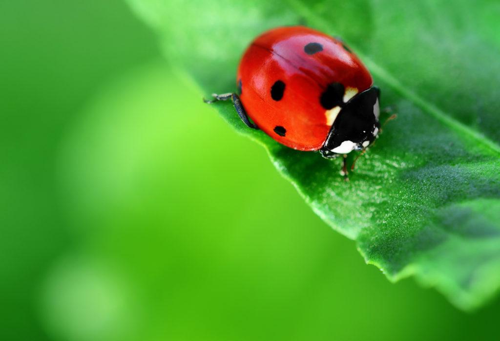 Warum man Pestizide vermeiden sollte - und Alternativen - Weed Seed Shop Blog