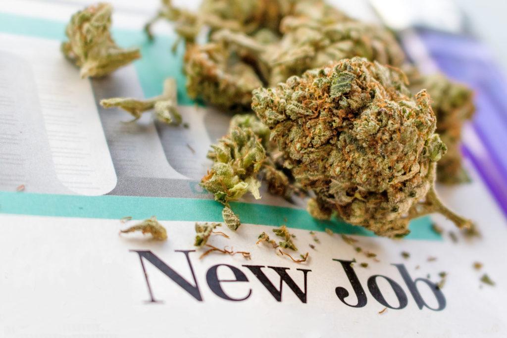 8 boulots dans l'industrie du cannabis - WeedSeedShop
