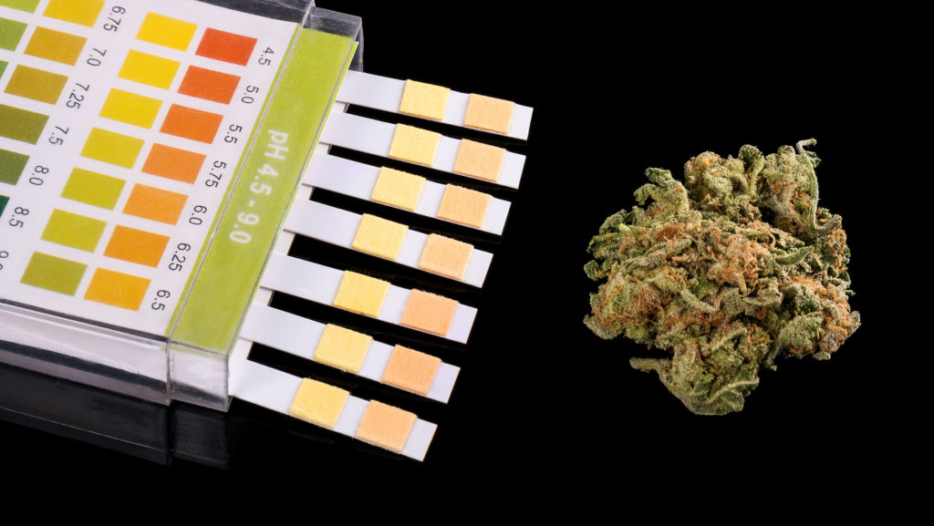 Los aspectos básicos del control del pH – WeedSeedShop