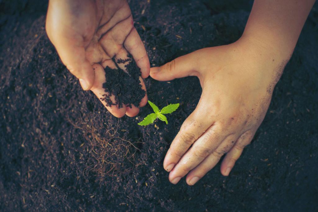 Du terreau fait maison pour le cannabis - WeedSeedShop