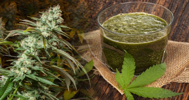 Do You Know The Health Benefits of Raw Cannabis Juice?