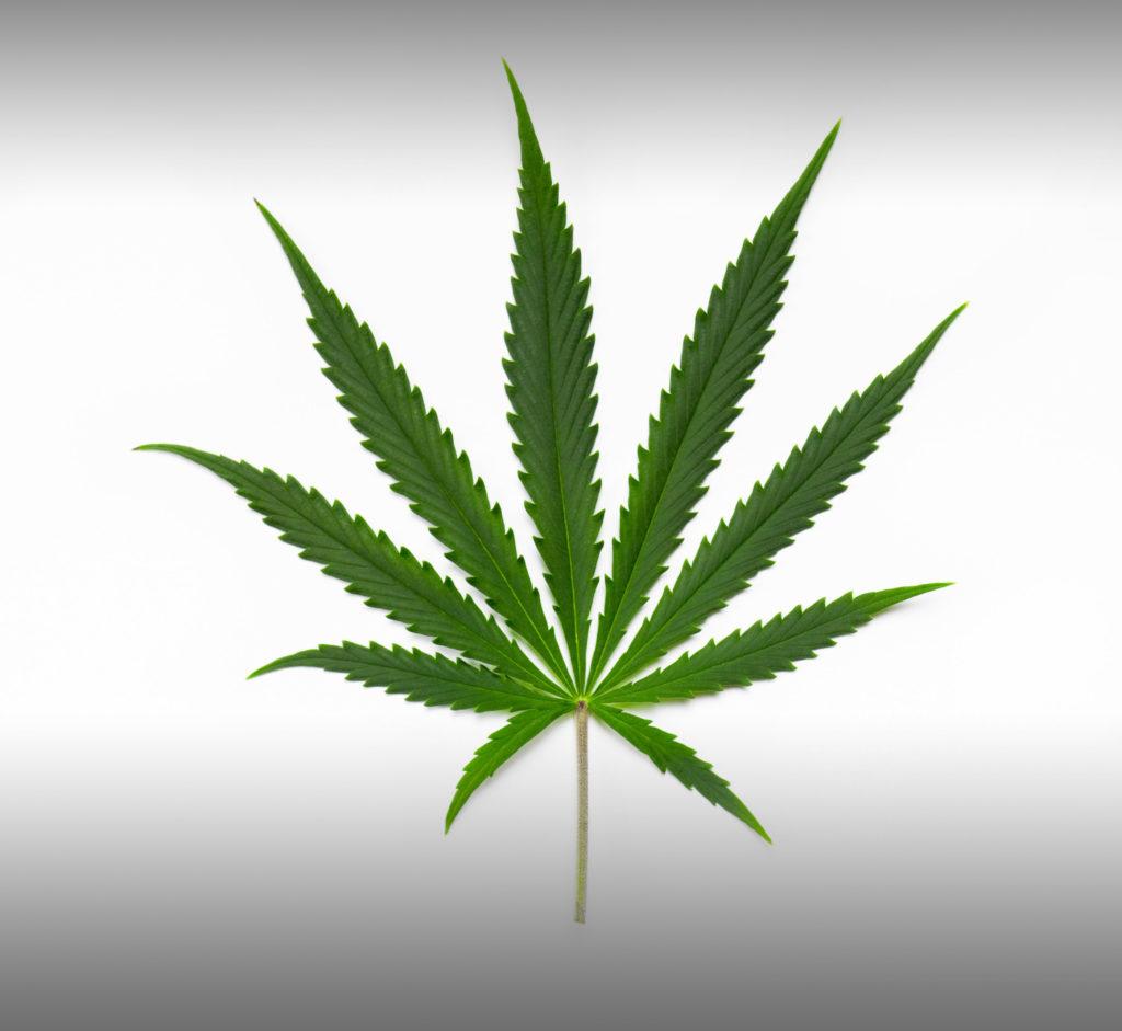 Quelle est la différence entre Sativa, Indica et hybride ? - Weed Seed Shop Blog