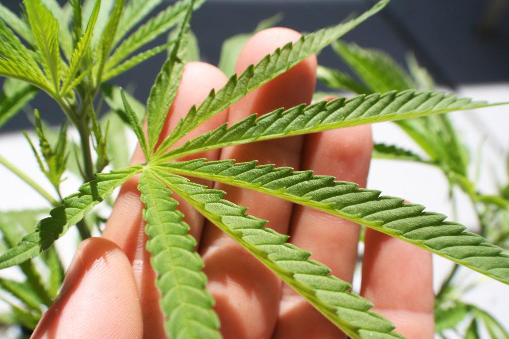 Was Ist Der Unterschied Zwischen High und Bekifft? - WeedSeedShop