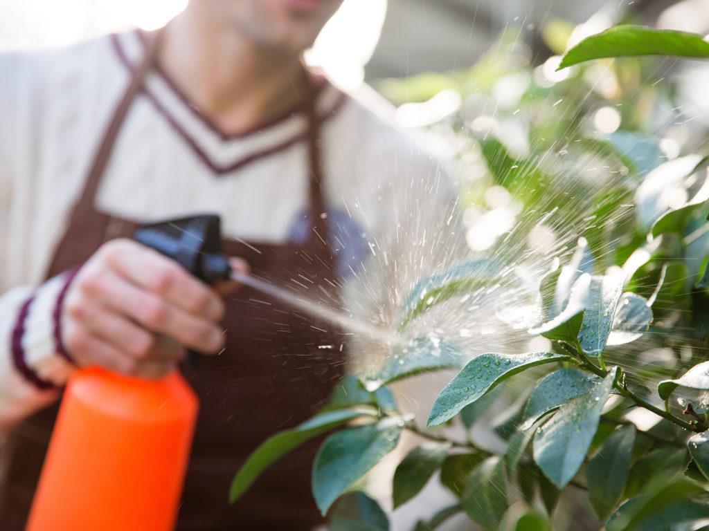 Hoe maak je compostthee voor je wietplantjes - Weed Seed Shop