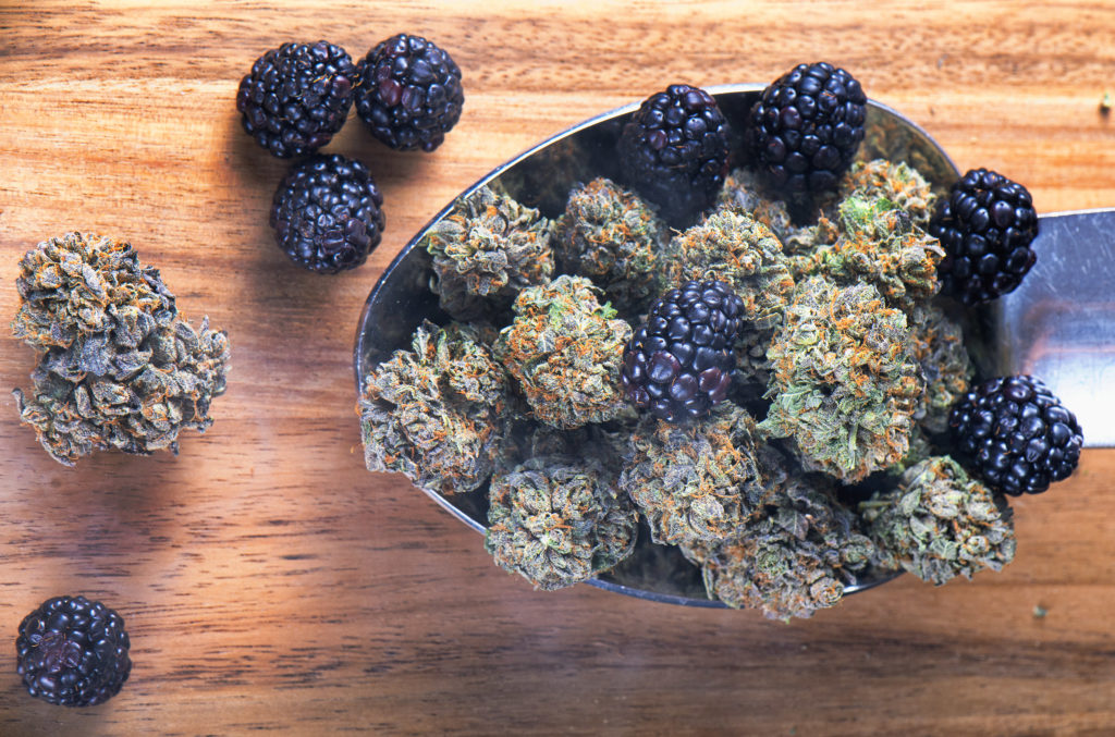 What Are Terpenes and What Do They Do? - WeedSeedShop Blog