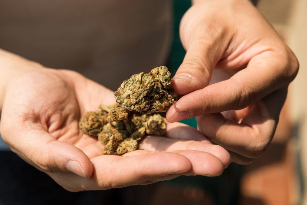 Hoe weet je of je wiet nog goed is – Weed Seed Shop Blog