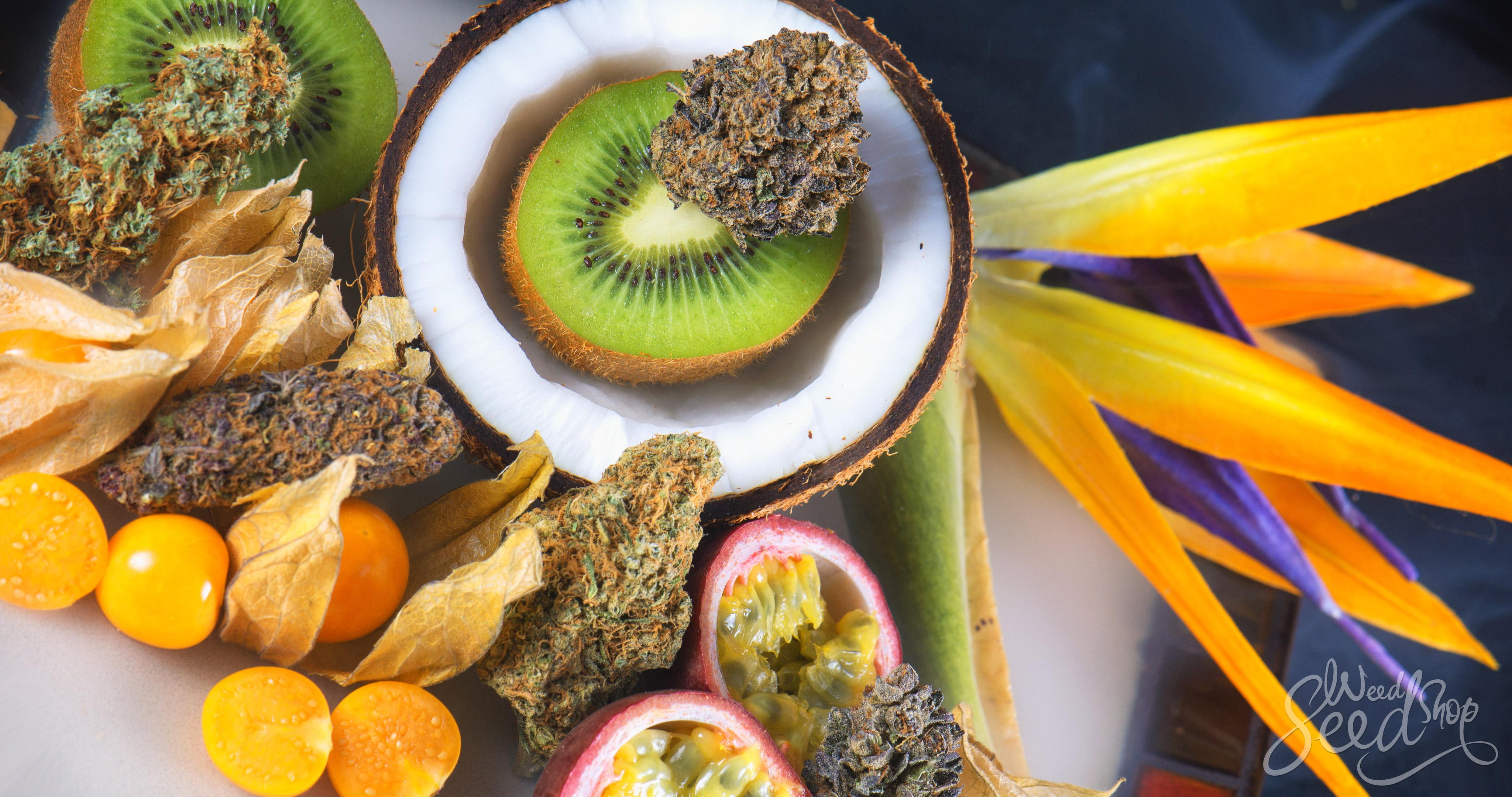 ¿Qué son los terpenos y qué hacen? – WeedSeedShop Blog