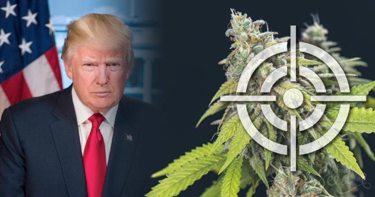 Quel avenir pour le cannabis sous Donald Trump ?