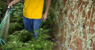 ger che beim cannabisanbau verbergen weed seed shop. Black Bedroom Furniture Sets. Home Design Ideas