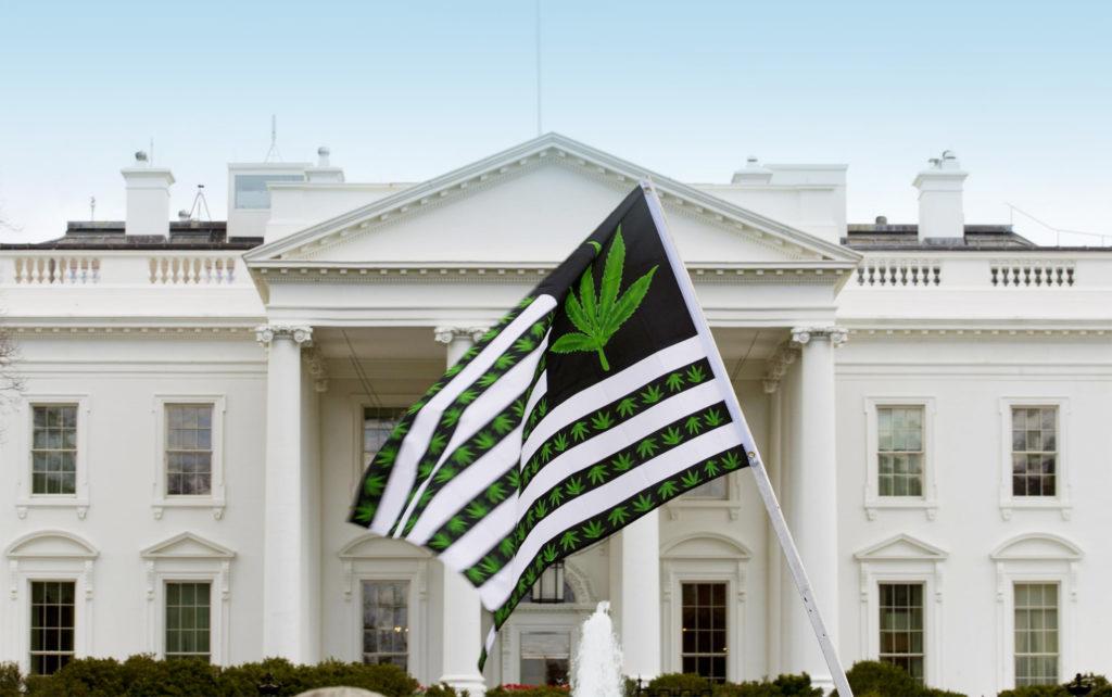 Der ewige Kampf - Rückschläge und Erfolge des Cannabis Kreuzzuges