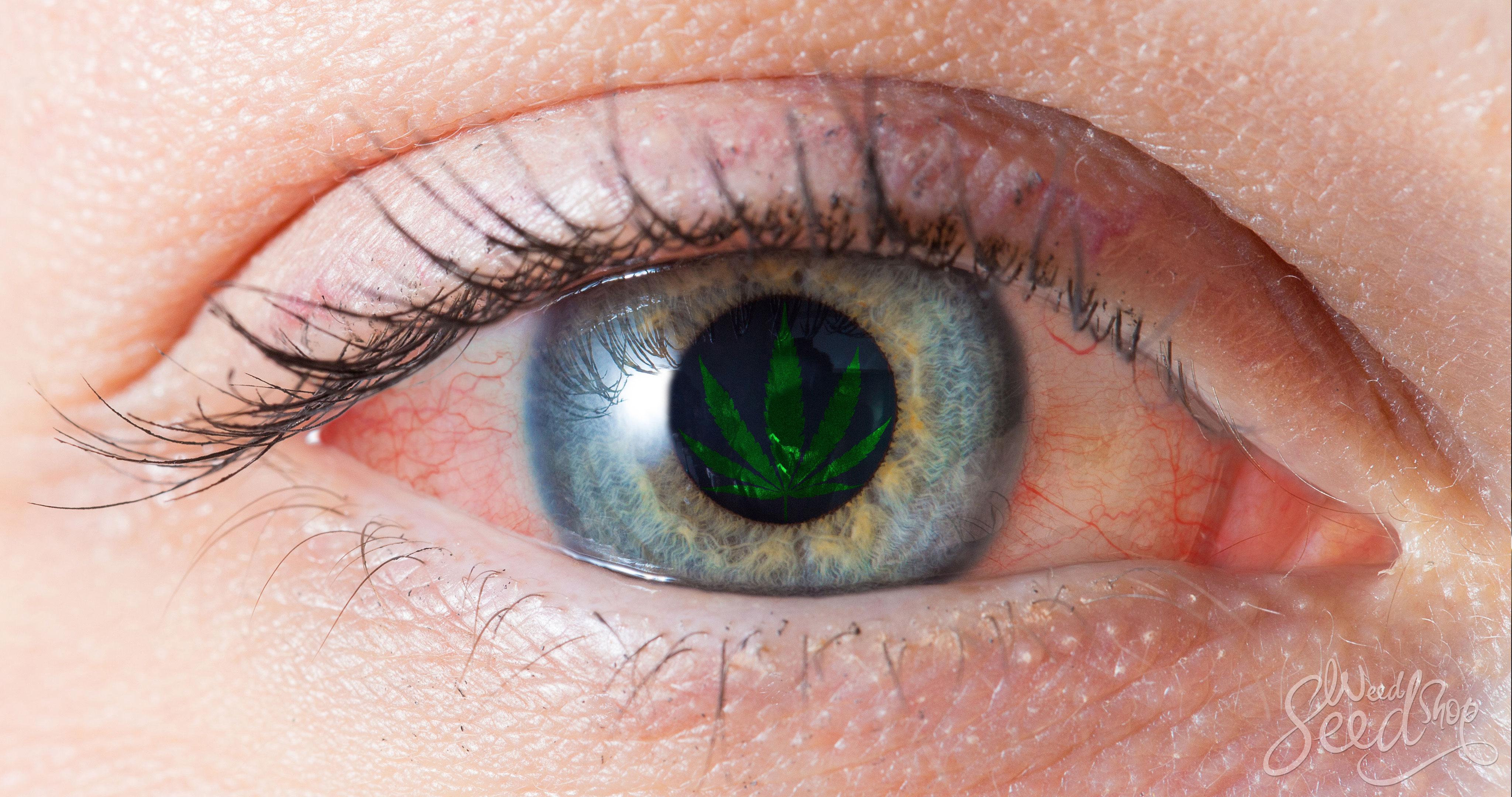 ¿Por qué la ganja pone nuestros ojos rojos? - WeedSeedShop Blog